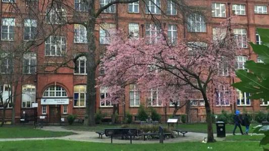 多伦多大学学院制度详细解析